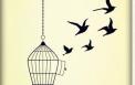 Let them free